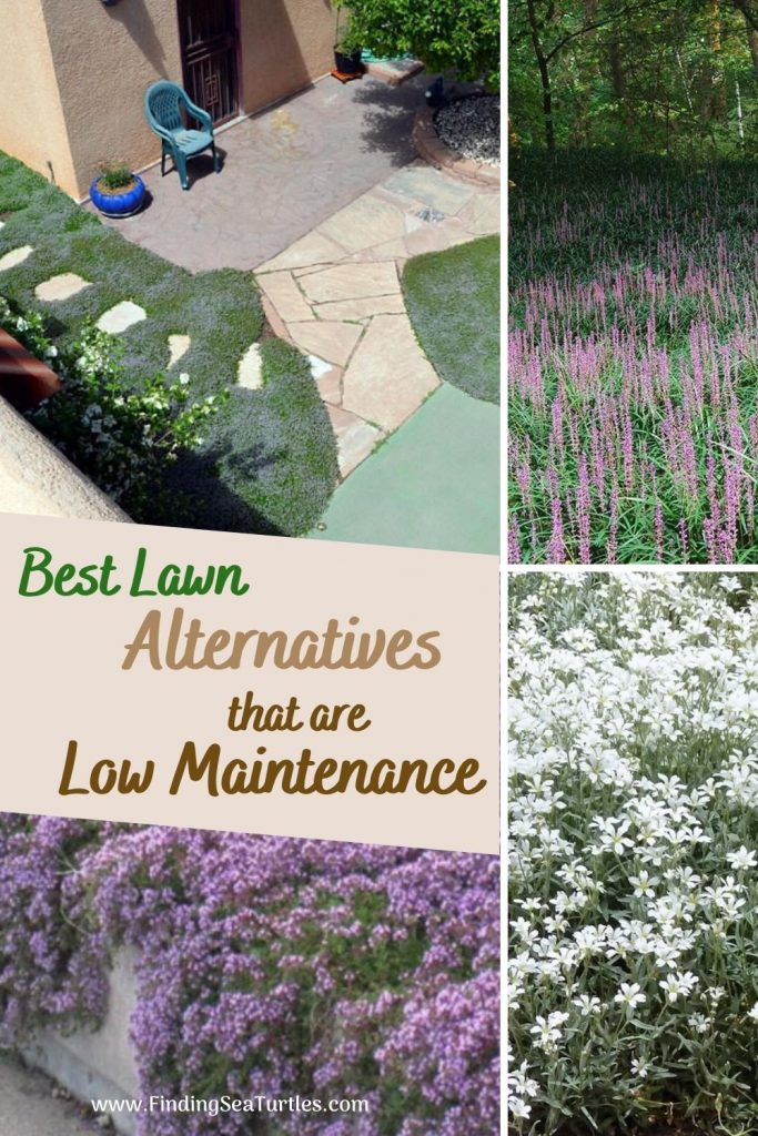 Best Lawn Alternatives that are Low Maintenance #LawnSubstitute #Gardening #ReplaceYourGrass #NoMowGrassAlternative #GrassAlternatives #LawnAlternatives