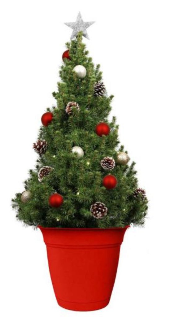 Fresh Tabletop Christmas Trees Dwarf Alberta Spruce Potted Christmas Tree by Home Depot #FreshMiniTree #MiniChristmasTree #TabletopChristmasTree #OnlineFlowers #ChristmasTrees #ChristmasTabletopTree