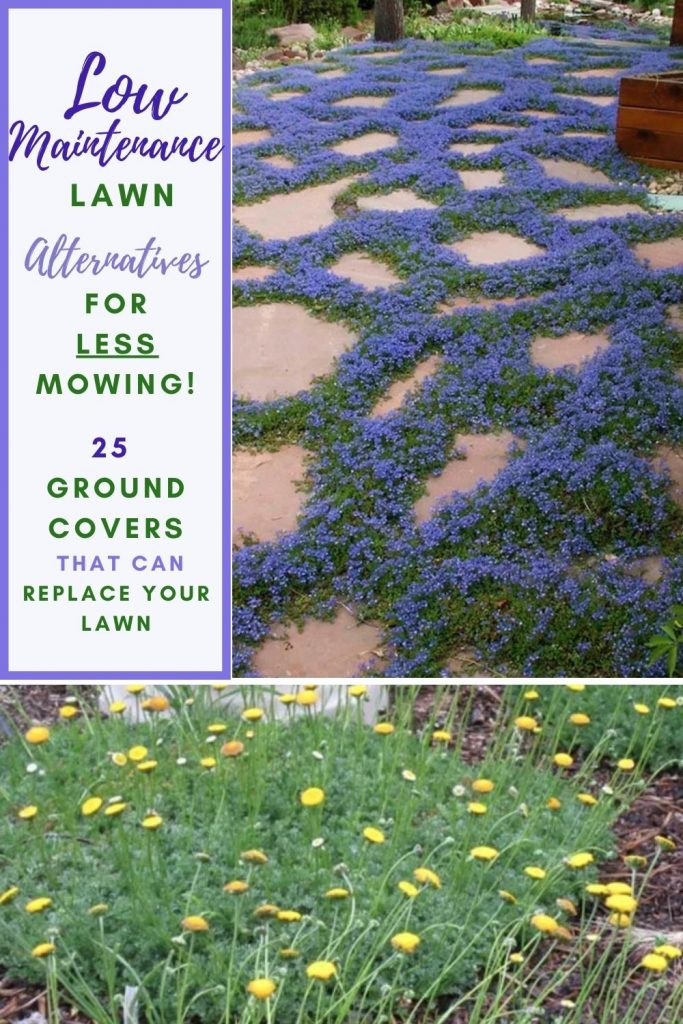 Low Maintenance Lawn Alternatives for Less Mowing #LawnSubstitute #Gardening #ReplaceYourGrass #NoMowGrassAlternative #GrassAlternatives #LawnAlternatives