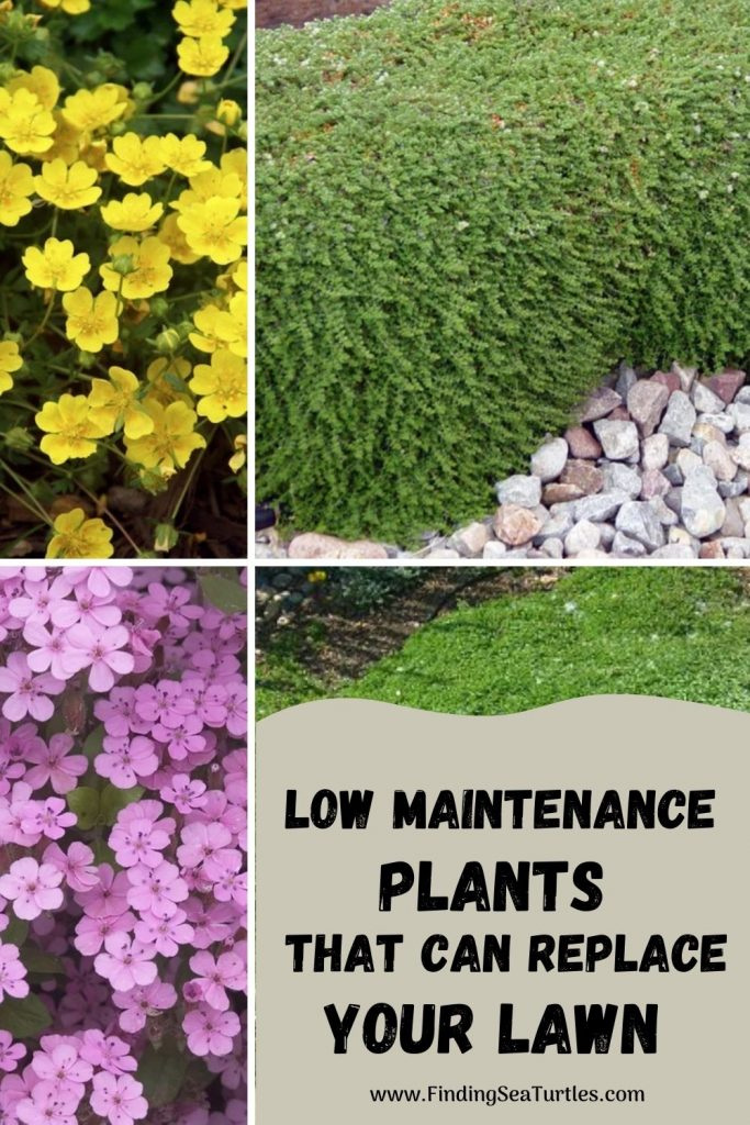 Low Maintenance Plants that can Replace Your Lawn #LawnSubstitute #Gardening #ReplaceYourGrass #NoMowGrassAlternative #GrassAlternatives #LawnAlternatives