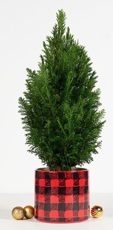 Cabin Inspired Decor Medium Cozy Flannel by The Bouqs Company #FreshMiniTree #MiniChristmasTree #TabletopChristmasTree #OnlineFlowers #ChristmasTrees #ChristmasTabletopTree