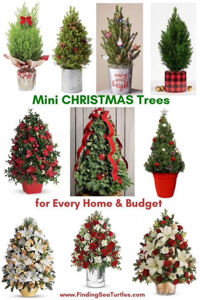 Fresh Tabletop Christmas Trees Mini Christmas Trees for Every Home and Budget #FreshMiniTree #MiniChristmasTree #TabletopChristmasTree #OnlineFlowers #ChristmasTrees #ChristmasTabletopTree