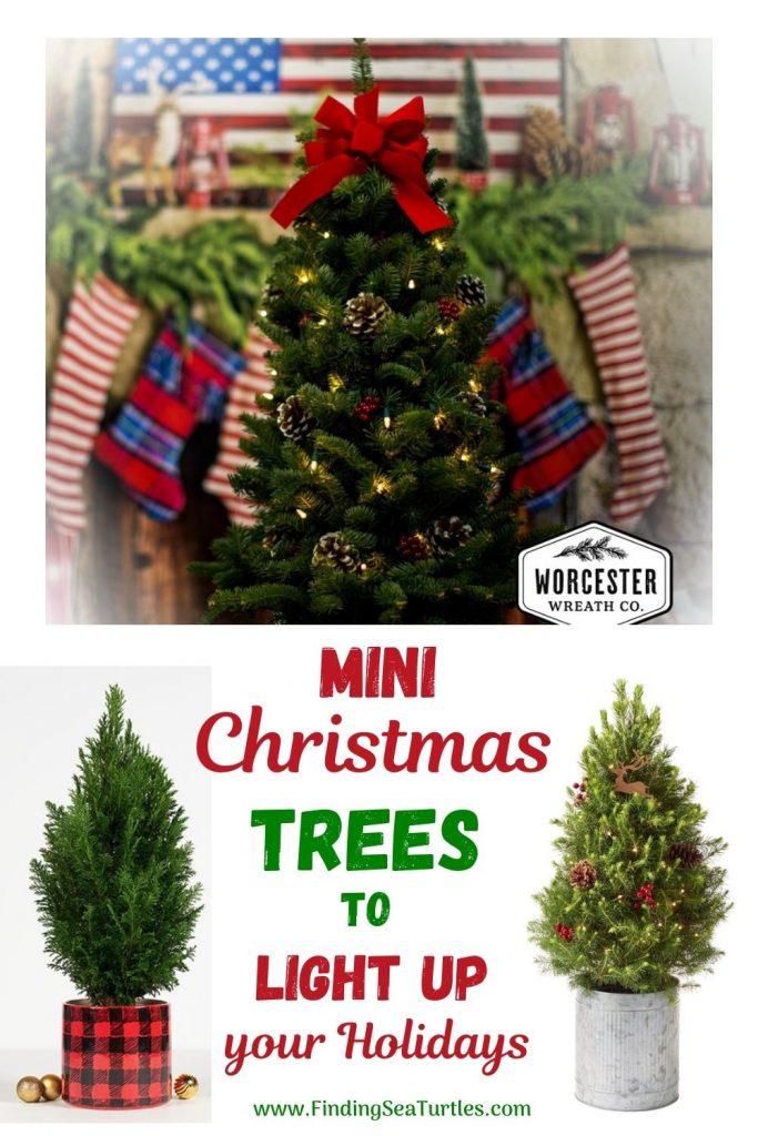 Fresh Tabletop Christmas Tree Mini Christmas Trees to Light up your Holidays #FreshMiniTree #MiniChristmasTree #TabletopChristmasTree #OnlineFlowers #ChristmasTrees #ChristmasTabletopTree