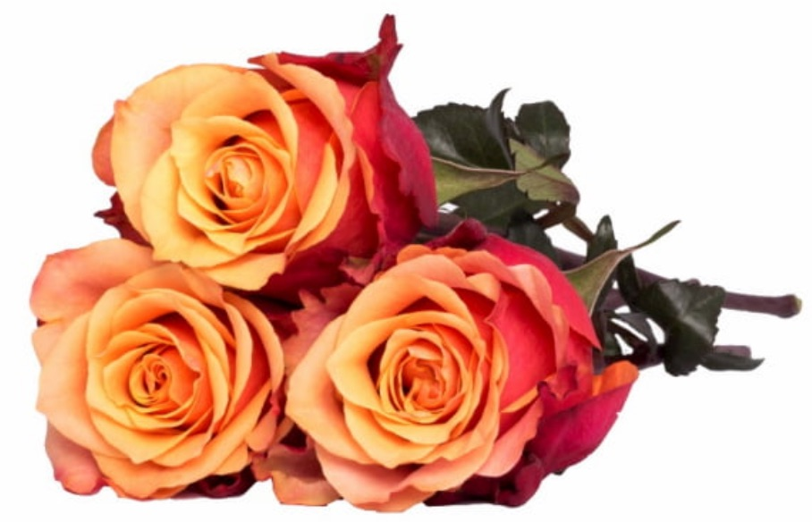 Best Online Thanksgiving Flowers Orange Box by A100Roses #FreshFlowers #flowerdelivery #bouquets #OnlineFlowers #FlowersOnline #AutumnFlowers #FallFlowers #ThanksgivingFlowers