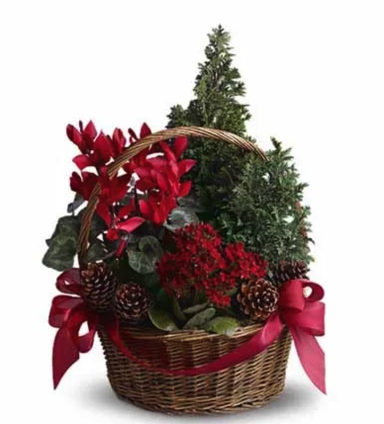 Celebrate the Holidays Tannenbaum Basket by Send Flowers #FreshFlowers #FlowerDelivery #bouquets #OnlineFlowers #FlowersOnline #Christmas #ChristmasFlowers #FestiveFlowers