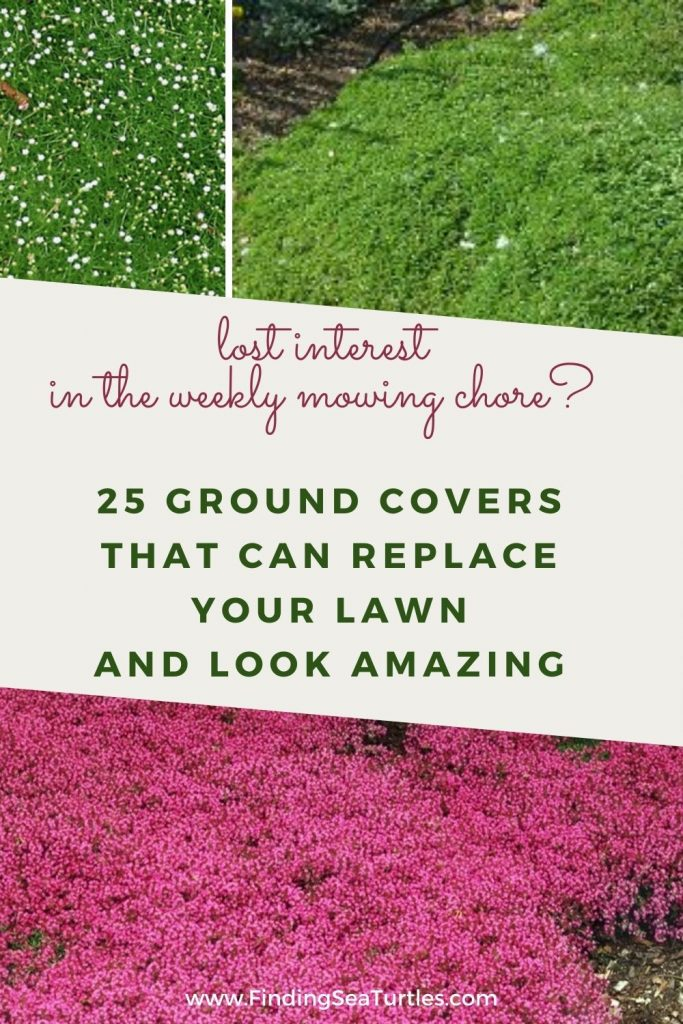 lost interest in the weekly mowing chore #LawnSubstitute #Gardening #ReplaceYourGrass #NoMowGrassAlternative #GrassAlternatives #LawnAlternatives