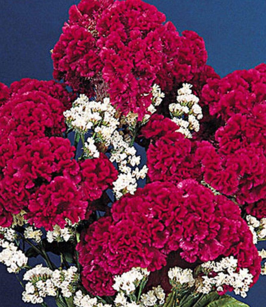 Attracts Pollinator Red Velvet Cake Cut Flower Arrangement #Celosia RedVelvetCakeCelosia #Gardening #SummerFlowers #BeneficialForPollinators #BeeFriendly