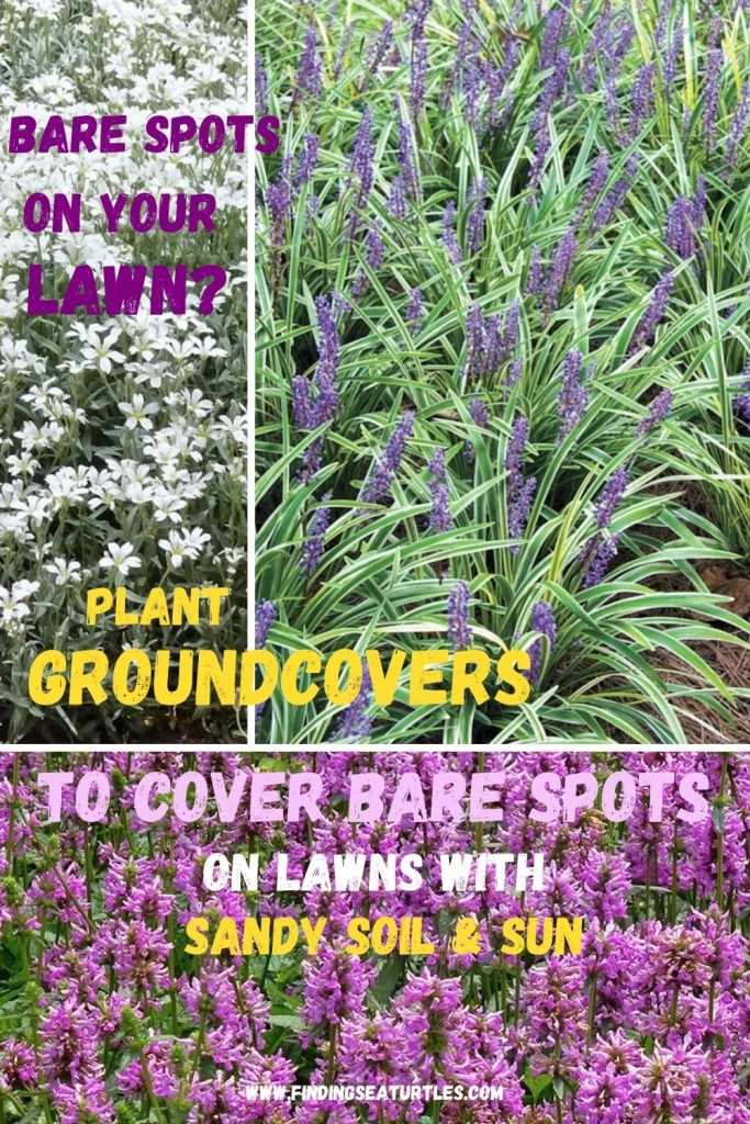 Bare Spots on Your Lawn Plant Ground covers to Cover #SandySoil #SandySoilGroundCovers #Gardening #GroundCoversForSandySoil #SandySoilSolutions #Landscaping