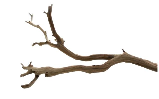 Tropical Island Decor Decorative Natural California Driftwood Branch #Driftwood #DriftwoodDecor #BeachHome #CoastalDecor #IslandDecor #SeasideDecor #TropicalIslandDecor #BeachHomeDecor