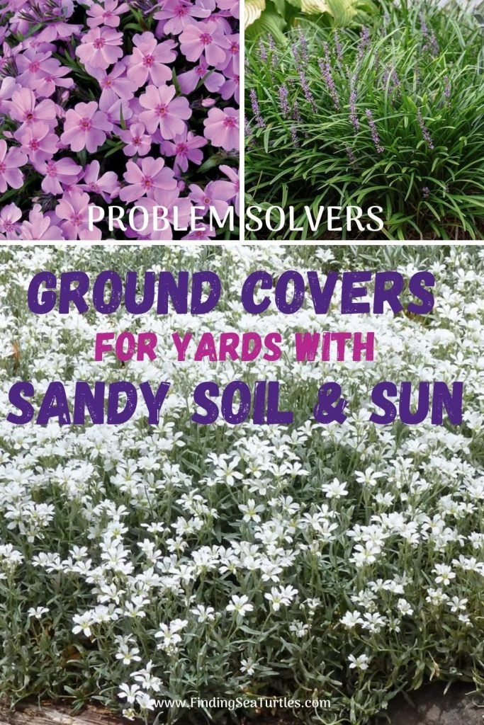PROBLEM SOLVERS Ground Covers for yards with Sandy Soil and Sun #SandySoil #SandySoilGroundCovers #Gardening #GroundCoversForSandySoil #SandySoilSolutions #Landscaping