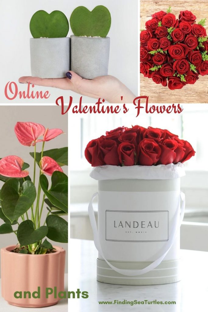 Online Valentines Flowers and Plants #flowers #FlowerDelivery #bouquets #OnlineFlowers #FlowersOnline #ValentinesDay #ValentinesFlowers #SendFlowers