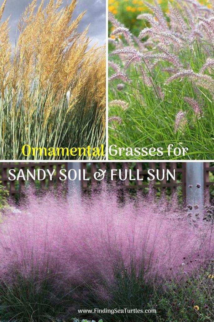 Ornamental Grasses for SANDY SOIL & FULL SUN #SandySoil #SandySoilOrnamentalGrasses #OrnamentalGrasses #Gardening #GrassesForSandySoil #SandySoilSolutions #Landscaping