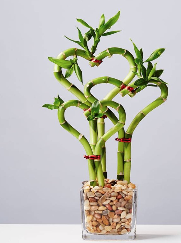 Love is in the Air Sweet Heart Bamboo by Plants com #flowers #FlowerDelivery #bouquets #OnlineFlowers #FlowersOnline #ValentinesDay #ValentinesFlowers #SendFlowers
