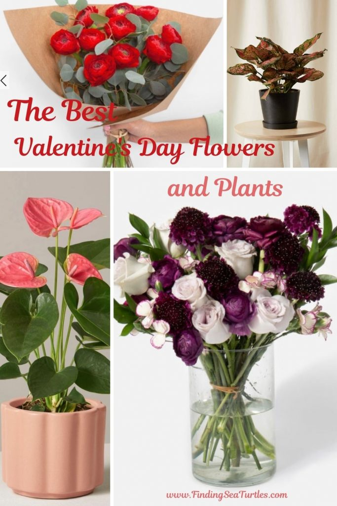 The Best Valentine's Day Flowers and Plants #flowers #FlowerDelivery #bouquets #OnlineFlowers #FlowersOnline #ValentinesDay #ValentinesFlowers #SendFlowers