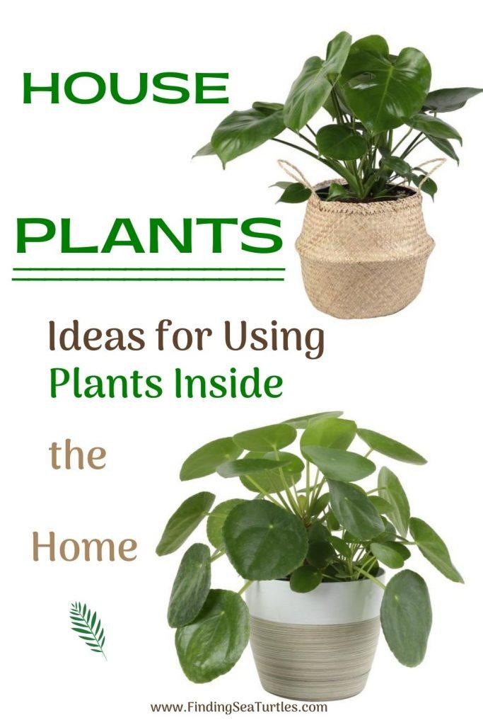 HOUSE Plant Ideas for Using Plants Inside the Home #Coastal #HousePlants #IndoorPlants #AirPurifyingPlants #GoGreen #GreenLiving #CoastalDecor #CoastalHome #CoastalLiving #InteriorTips #InteriorTipsAndTricks #GreenLovers #InteriorDesignTips #HomeDecorTipsAndTricks #HomeDecor