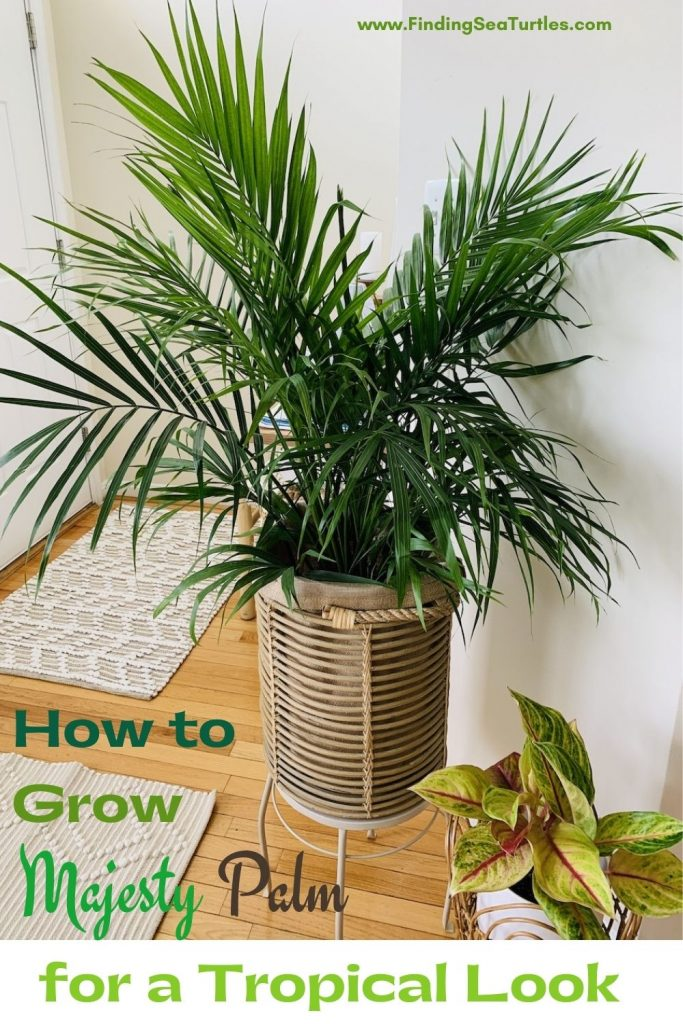 How to Grow Majesty Palm for a Tropical Look #Palms #MajestyPalm #IndoorPlants #HousePlants #Solutions #GrowMajestyPalm #GoGreen