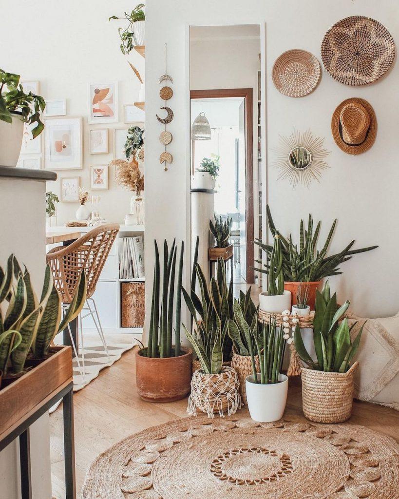 Houseplant Decor Ideas Inspo 17 #Coastal #HousePlants #IndoorPlants #AirPurifyingPlants #GoGreen #GreenLiving #CoastalDecor #CoastalHome #CoastalLiving #InteriorTips #InteriorTipsAndTricks #GreenLovers #InteriorDesignTips #HomeDecorTipsAndTricks #HomeDecor