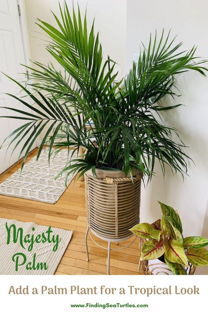 Majesty Palm Add a Palm Plant for a Tropical Look #Palms #MajestyPalm #IndoorPlants #HousePlants #Solutions #GrowMajestyPalm #GoGreen