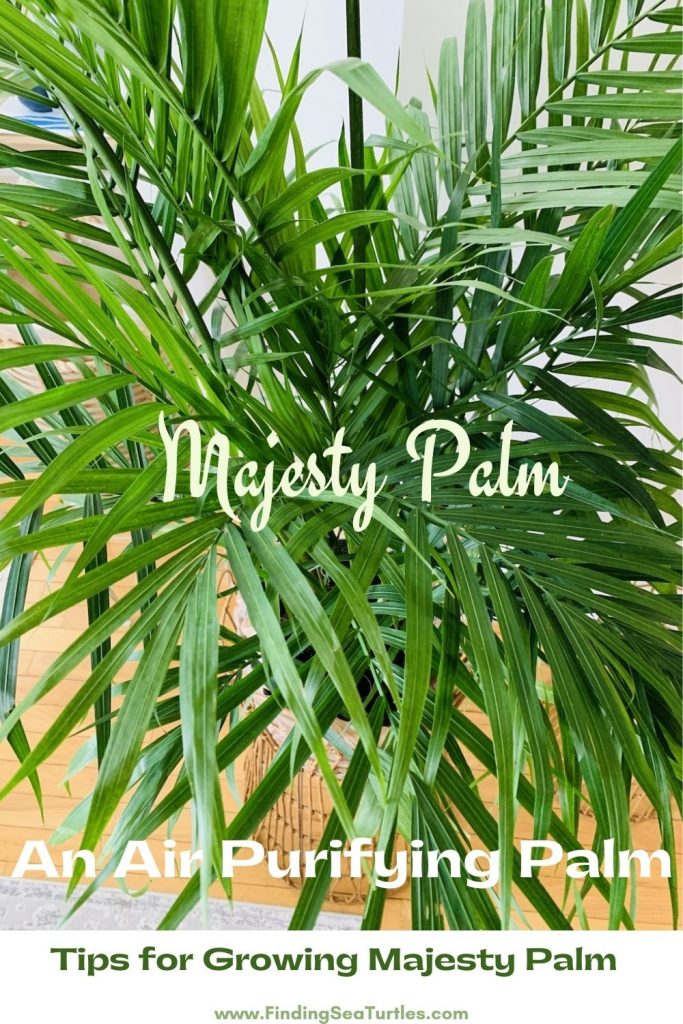 Majesty Palm An Air Purifying Palm Tips for Growing Majesty Palm #Palms #MajestyPalm #IndoorPlants #HousePlants #Solutions #GrowMajestyPalm #GoGreen