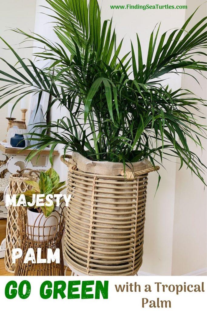 Majesty Palm Go Green with a Tropical Palm #Palms #MajestyPalm #IndoorPlants #HousePlants #Solutions #GrowMajestyPalm #GoGreen