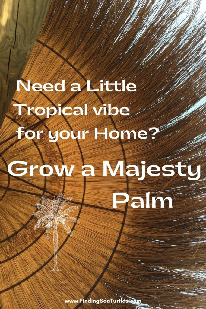 Need a Little Tropical Vibe for your Home Grow a Majesty Palm #Palms #MajestyPalm #IndoorPlants #HousePlants #Solutions #GrowMajestyPalm #GoGreen