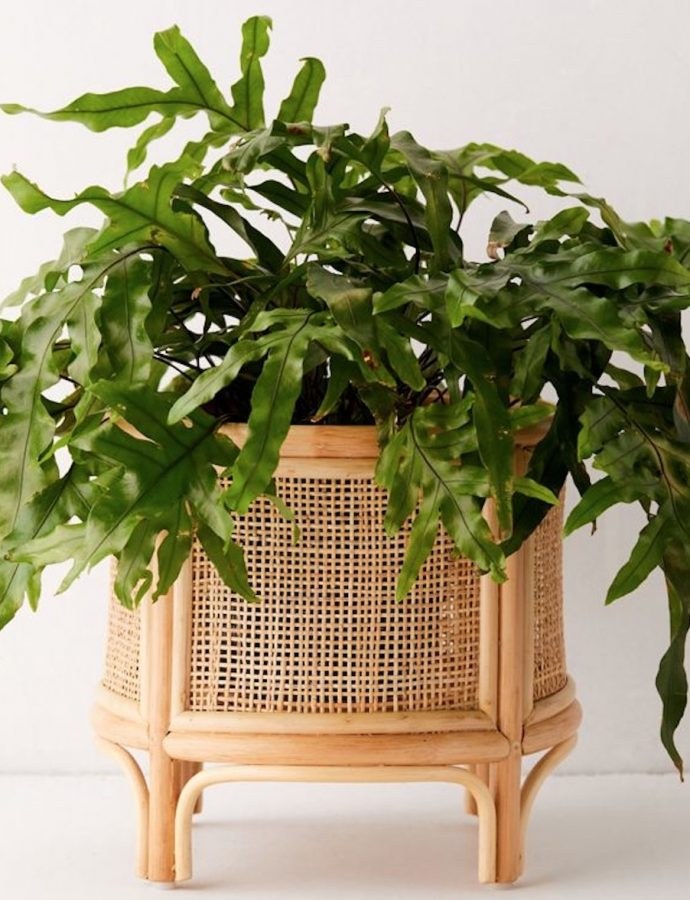 15 Best Rattan Pot Planters with Boho Style