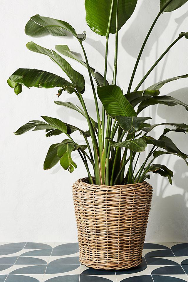 Rattan Pot Planters Rattan Basket Planter #Coastal #Boho #Planters #PotPlanters #RattanPotPlanters #CoastalDecor #CoastalHome #CoastalLiving #GoGreen #GreenLiving #Sustainable #EcoFriendly #BohoDecor