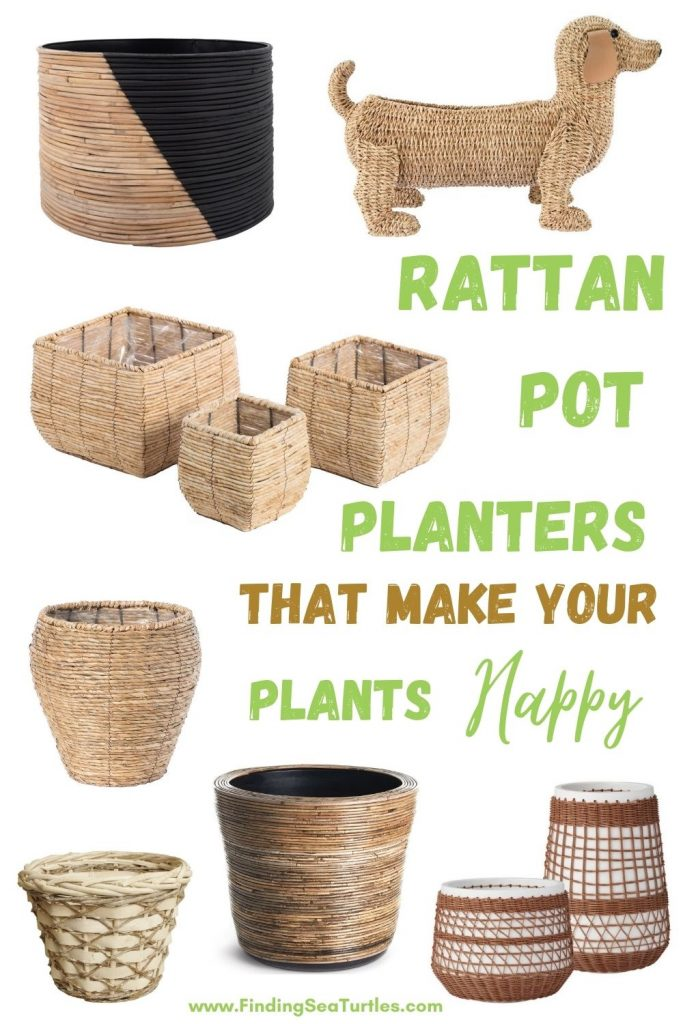 Rattan Pot Planters that make your Plants Happy #Coastal #Boho #Planters #PotPlanters #RattanPotPlanters #CoastalDecor #CoastalHome #CoastalLiving #GoGreen #GreenLiving #Sustainable #EcoFriendly #BohoDecor