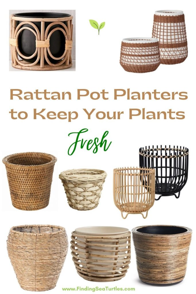 Rattan Pot Planters to keep your Planters Fresh #Coastal #Boho #Planters #PotPlanters #RattanPotPlanters #CoastalDecor #CoastalHome #CoastalLiving #GoGreen #GreenLiving #Sustainable #EcoFriendly #BohoDecor