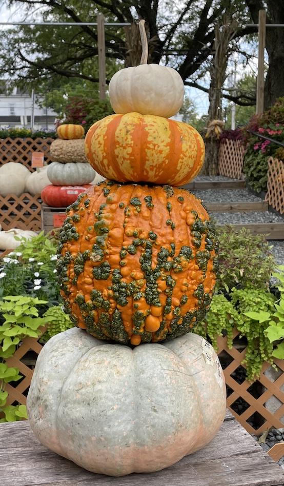 Pumpkin Stack at The Garden Shoppe_1615 #Fall #Porch #FallPorch #FallDecor #HomeDecor #AutumnDecor